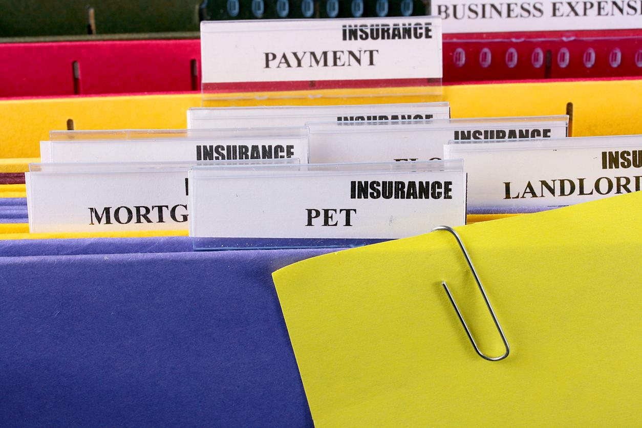 cat-insurance-older-cats