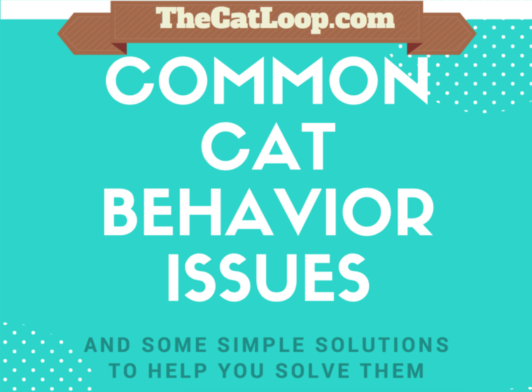 common-cat-behavior-issues