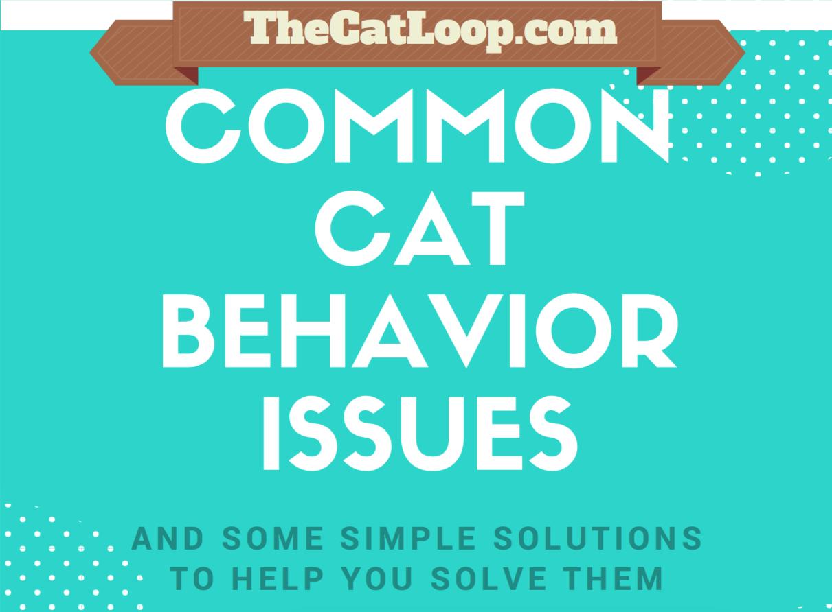 common-cat-behavior-issues