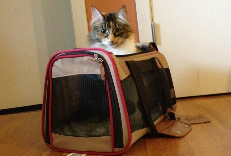 best cat travel bag